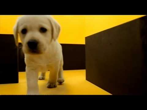 Pedigree Dog Food 2010 Ad