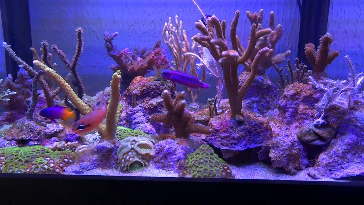 Aquário de coral duro (em teste) - YouTube
