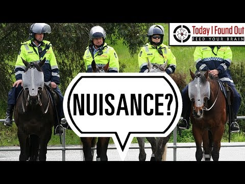 Do Mounted Police Officers Have to Clean Up Their Horse's Poop