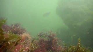 Petite sortie du début de saison dans l'eau sale du 44