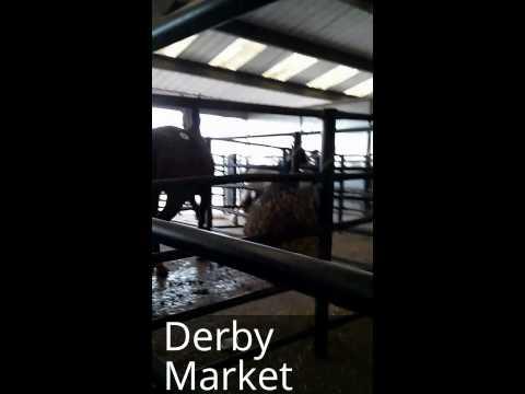 Derby Horse Sale 26th April 2014