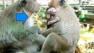 Baby Prutus JR Bothered By Evil Dolly|  Why Dolly Doing Like This To Pity Baby Prutus JR?