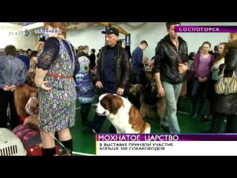 Время новостей. Выставка собак в Сосногорске. 15 апреля 2014