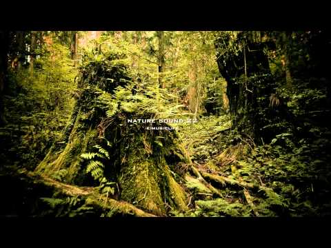 Nature Sound 22 - SINGING INSECTS / THE MOST RELAXING SOUNDS -