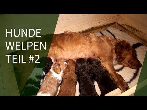 Hundewelpen ► Ria`s Hundewelpen Teil #2
