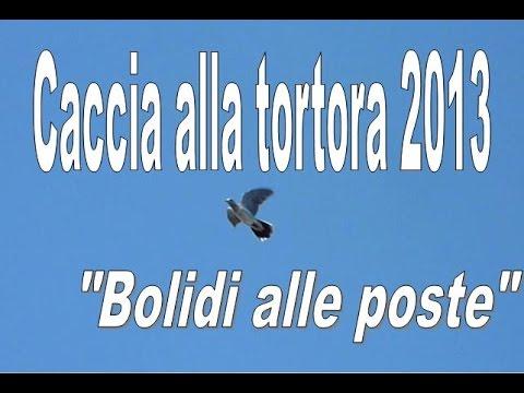 caccia alla tortora 2013