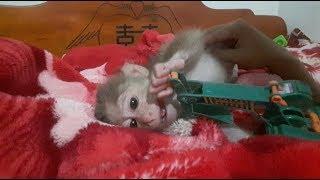 Baby Monkey Doo And Mom / Playtime - Funny Animals