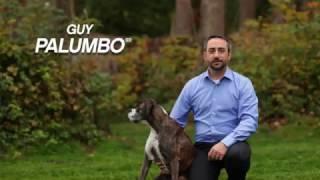 Vorschaubild Guy Palumbo