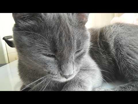 Котик зевает