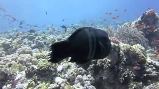 Diving July 2012 - Tiran Island