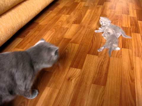 котята учатся ходить))