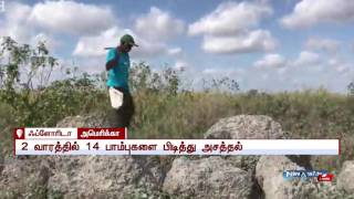 2 Tamil people catches 14 pythons in 2 weeks for Florida forest department | News7 Tamil