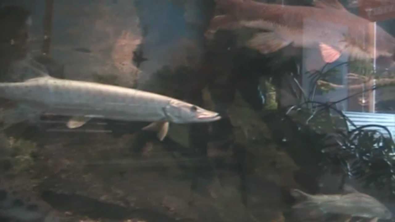 Great Lakes Aquarium Duluth Minnesota Youtube