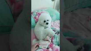 Look at these cute and funny puppies dogs 1664