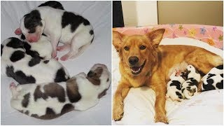 Mama dog gave birth to four puppies that look nothing like her
