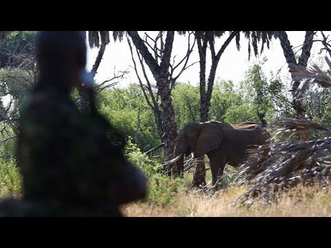 Poaching in Kenya: action needed to save elephants