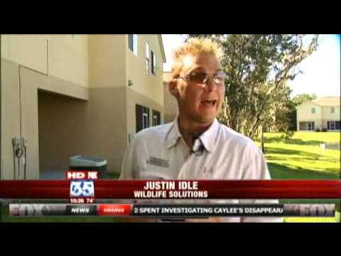 Squirrels Terrorize News Reporter
