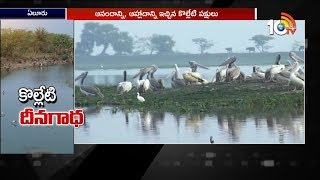 Pathetic Condition Of Kolleru Lake Birds | Special Story  News