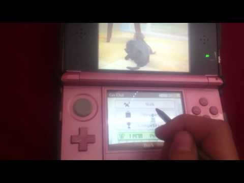 My Pets On Nintendogs + Cats (Toy Poodle Version).