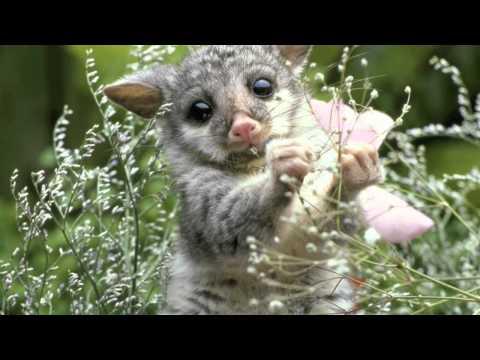 Biodiversity Music Video
