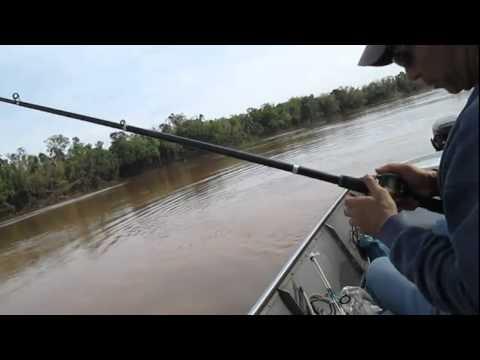 Pescaria De Barbado - Rio Ivaí PR