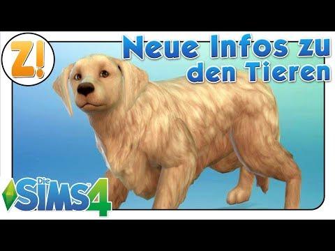 Sims 4 Entwicklertagebuch: Neue Infos zu den Tieren | HUNDE UND KATZEN