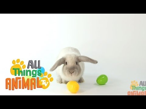 RABBITS: Animals for children. Kids videos. Kindergarten | Preschool learning