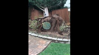 [Hey did you see this video?                       Wind storm...] Video