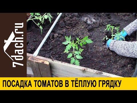 Посадка томатов в теплую грядку - 7 дач