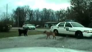 Hunde Zerlegen Polizeiauto