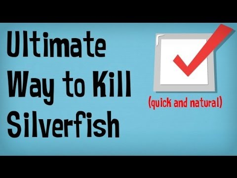 How to get rid of silverfish in your home best tips for for How to get rid of silver fish