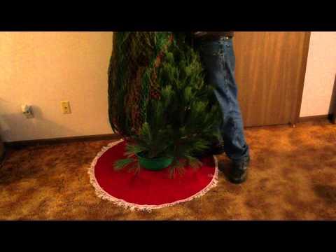 Revealing The Atkins Family Tree!