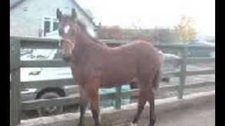 me n the horses xxxx