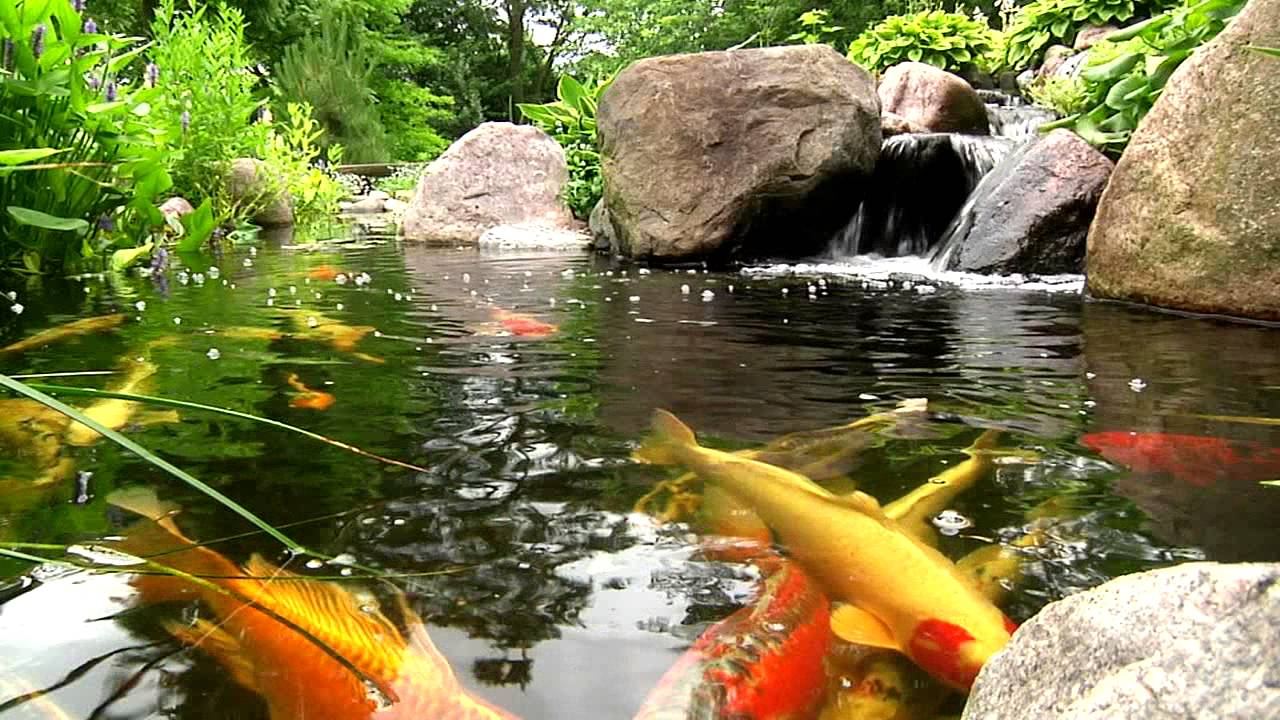 Welcome To Splash Supply Co Ecosystem Koi Pond Filtration