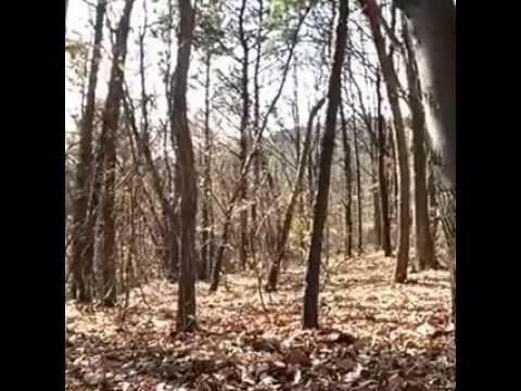 Ilusão de Ótica   Fantasma Na Floresta