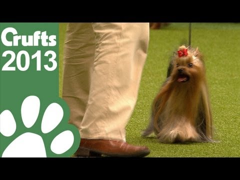 Group Judging Toy and Presentation - Crufts 2013