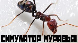 Смотреть прохождение игры симулятор муравья