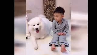 Cute Puppy dogs and Cat's funny videos part 2   YouTube 360p