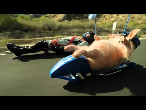 Maxwell The Piggy Meets The Street Luge Geico Commercial video
