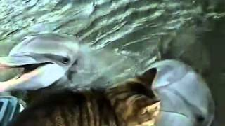 Cat and Dolphins Playing Together...!!!!   A MUST WATCH