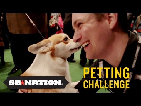 0 Westminster Kennel Club Dog Show: Petting Challenge