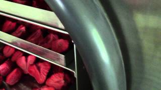 Freeze dried Strawberries HARVEST RIGHT FREEZE DRYER