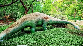 Jungle ka raja sher || kanpur Zoo || Animal watching Magazine Awm || U.P. India