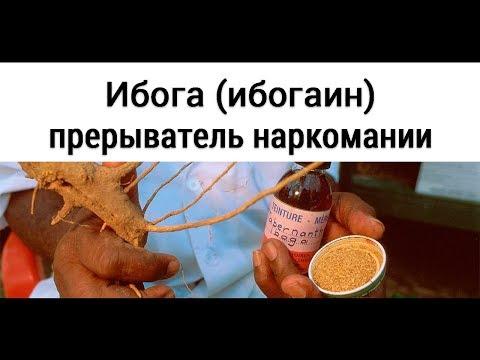 Ибога (ибогаин) - прерыватель наркомании