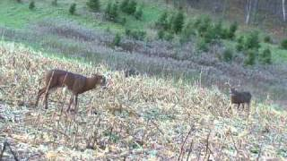 DSD Deer Decoy