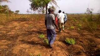 Otuo Farms Com. Ltd. Gh. land leasing inspection.