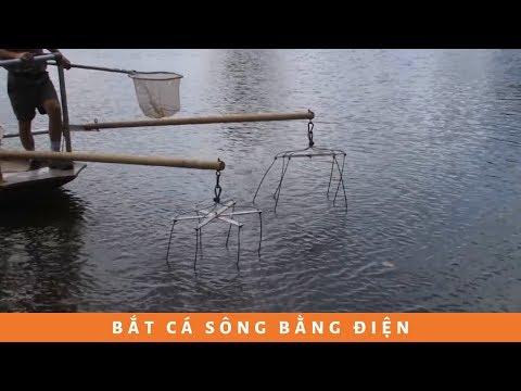 Cách bắt cá bằng điện ở phương tây quá KHÁC với phương đông...