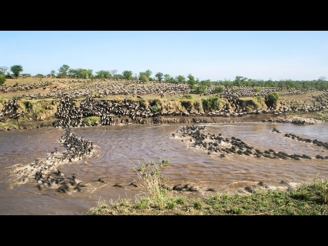 Wildebeest Migration Time-lapse