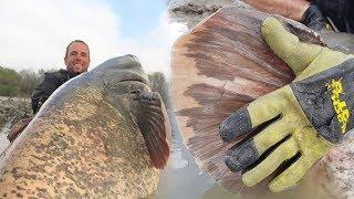 Viral Pemancing Dapat Ikan Lele Melebihi Ukuran Buaya, Sempat Kira Pencingannya Menyangkut di Pohon
