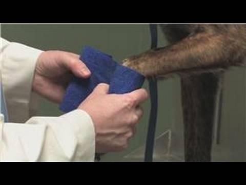 How To Treat Broken Toe On Dog